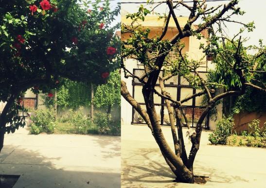 hibiscus collage